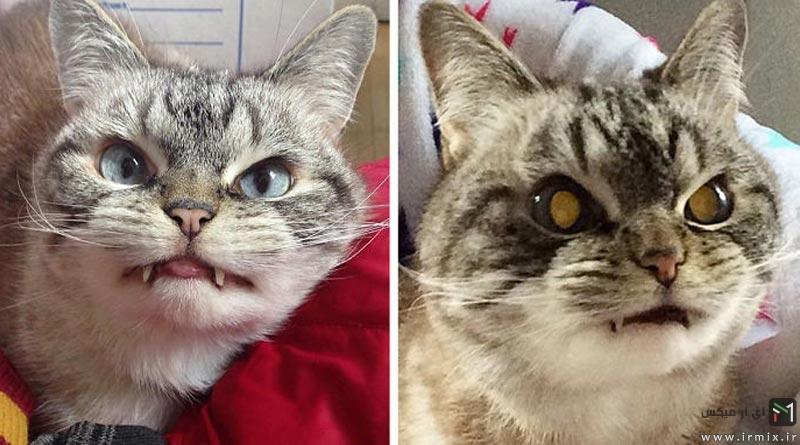 گربه خون آشام