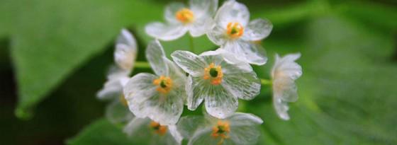 گل های نامرئی شگفت انگیز در جنگل