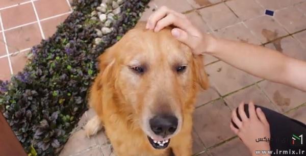 تشویق سگ به حمام