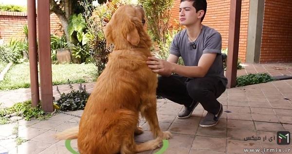 آماده سازی شستن سگ