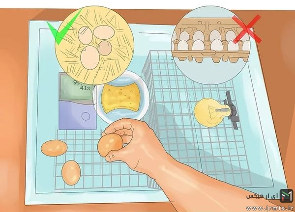 گذاشتن تخم مرغ ها