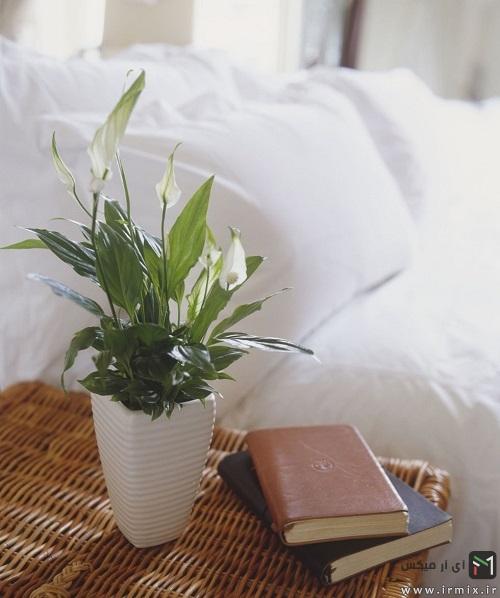 بهترین گل آپارتمانی