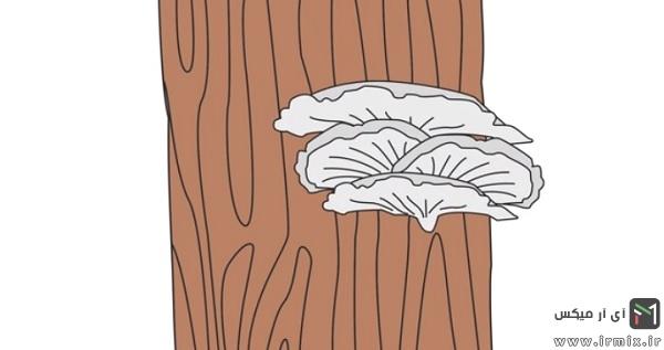 آموزش پرورش قارچ دکمه ای در منزل