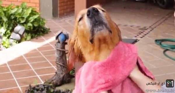 خشک کردن سگ