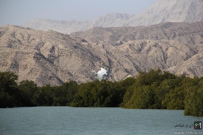 جنگل های ناشناخته ایران