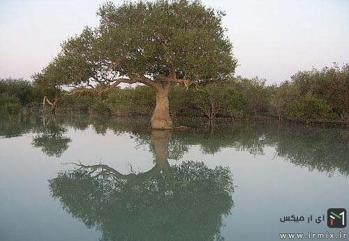 عجیب ترین جنگل ایران