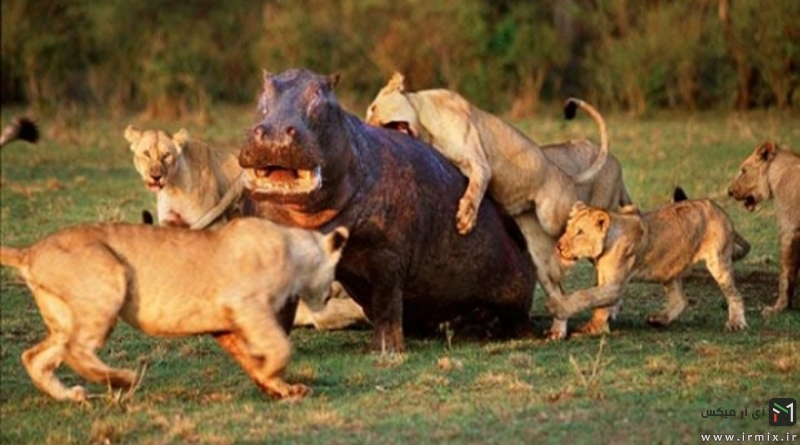 ۱۳ تصویر آهسته شگفت انگیز از دنیای حیوانات وحشی