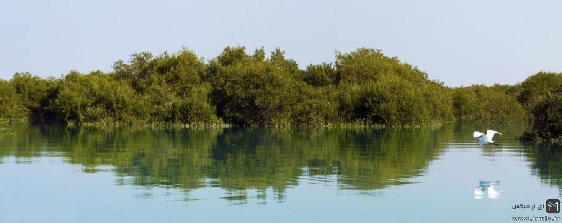 عجیب ترین جنگل ایران  : درختان شناور