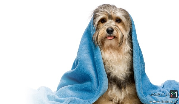 روش کلی شستن سگ