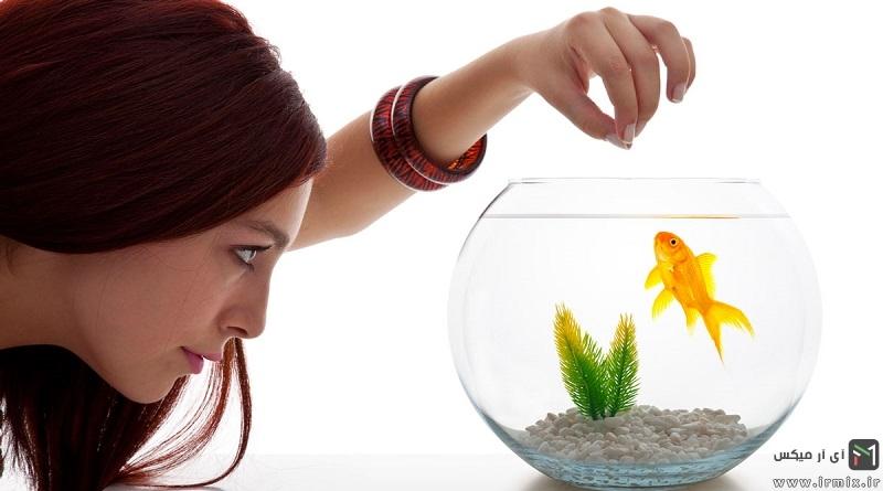 آموزش روش نگهداری از ماهی قرمز شب عید در خانه