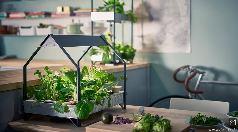 How to grow vegetables in your apartment