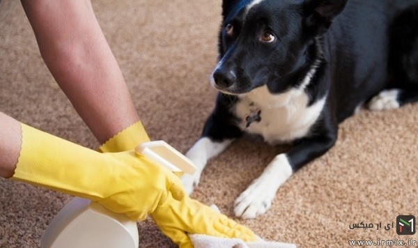 cleaning-pet-stain-carpet1