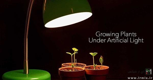 فاصله مناسب با گیاه