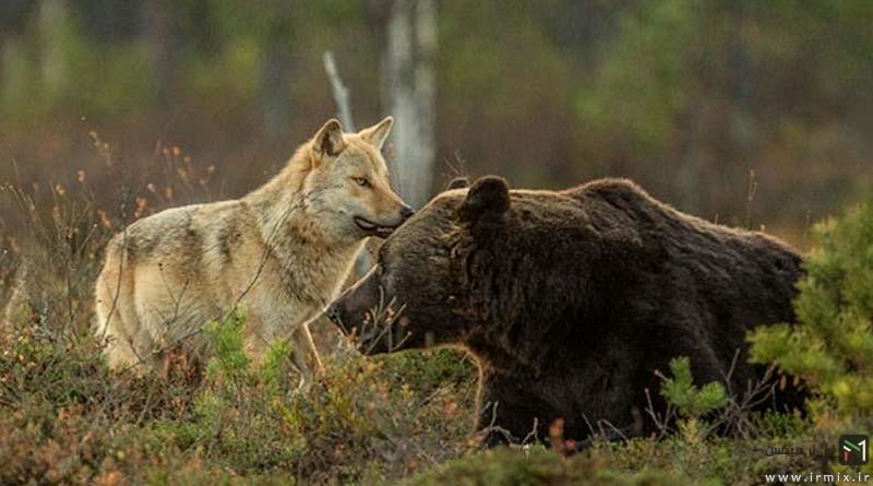 شگفت انگیز و تکرار نشدنی، زندگی دوستانه دو هیولای درنده جنگل