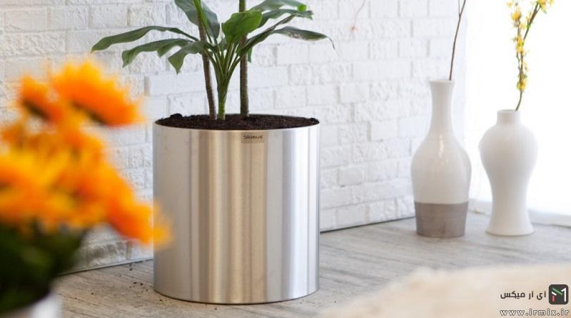 با داوم ترین گل مناسب  آپارتمان جهت تصفیه کننده هوا و مقاوم به سرما کدام است؟