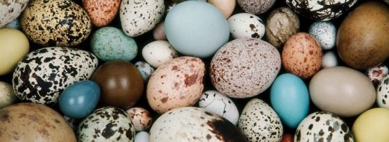 The world's most beautiful birds' eggs