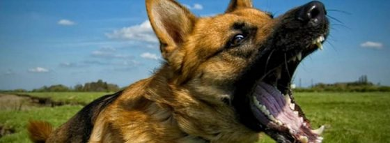 4 روش جلوگیری از پارس کردن سگ با اسپری ضد پارس، قلاده، رفتار شناسی و آموزش سگ