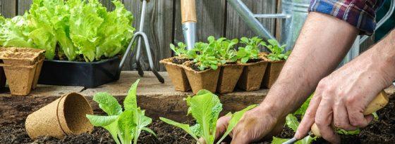 فصل و زمان کاشت سبزیجات، صیفی جات و محصولات زراعی در پاییز، زمستان و بهار