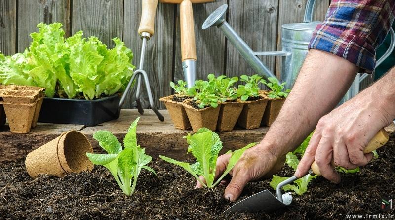فصل و زمان کاشت سبزیجات، صیفی جات زراعی مناسب فصل بهار در خانه